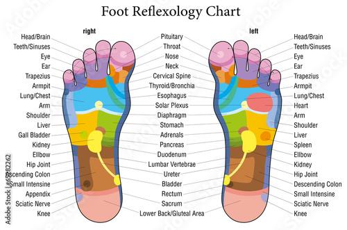Foot reflexology chart description - 65282262