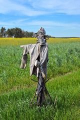 Scarecrow on green field, Ukraine