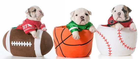 sports hounds