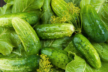 pickled cucumbers green leaves chrono