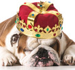 dog wearing crown