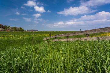Grüne Wiese und blauer Himmel im Sommer