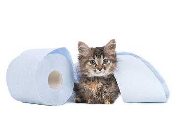 Niedliches Kätzchen mit Klopapier Rolle