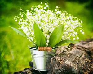 Lily of the valley flowers in bucket in forest