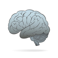 The human brain. Conceptual vector illustration