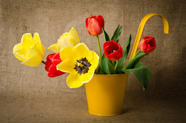 Colorful tulips in yellow pot on burlap