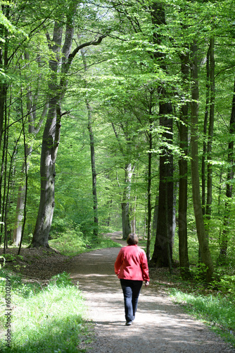canvas print picture Spaziergang im Wald