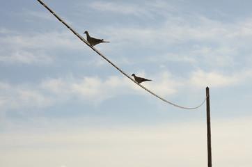 Dos aves sobre un cable