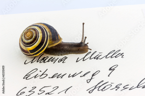 Schnecke auf Briefumschlag