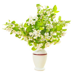 Flowering branches of apple tree in a vase isolated over white