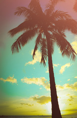 Retro Styled Hawaiian Palm Tree