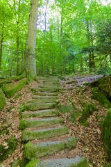 Black Forest Stone Staircase