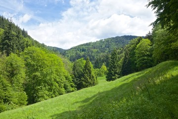 Black Forest Meadows