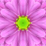 Pink Mandala Concentric Flower Center Kaleidoscope
