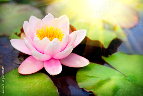 Fotobehang Lotusbloem Blooming floating waterlilly closeup. Lotus flower in pond
