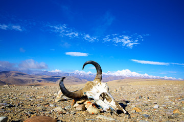 Tibetan landscape with yak bones and snow mountains