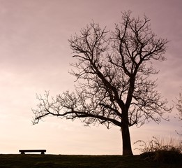 Tree and Bench Silhouette Scene 02