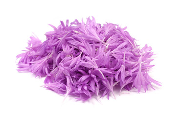 purple flower petals on white background