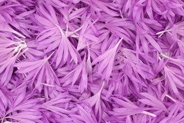 purple flower petals abstract background