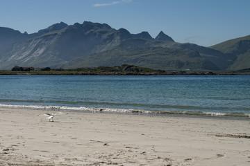 lofoten island white sand beach