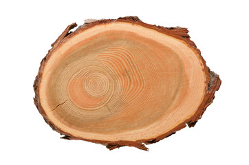 Cross-section of stem tree