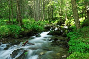 Ecoulement lent d'une rivière en sous bois