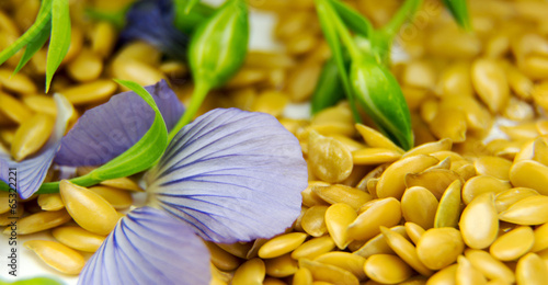 Golden flax seeds with blue flower petals closeup - 65322221