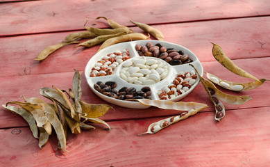 color shelled beans dried open pods on table