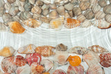 Seashells under water