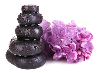 Composition with spa stones and lilac flowers, isolated on
