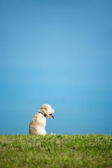 Hund sitzt auf Wiese