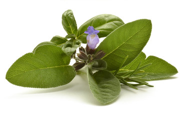نبات عطري Plante aromatique Pianta aromatica