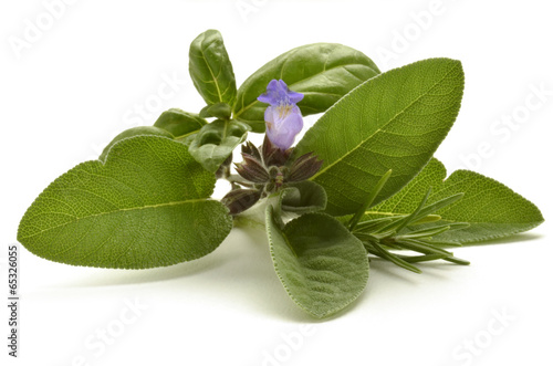canvas print picture نبات عطري Plante aromatique Pianta aromatica