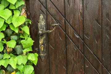 Wooden retro door with ivy