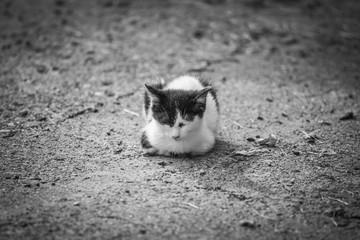 Gattino randagio riposa