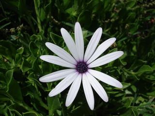 Weiße Blume Makro