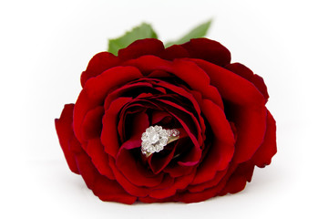 Diamond Ring in a Rose