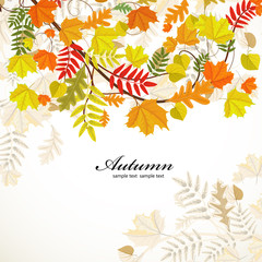 Autumn leaf pattern for your design