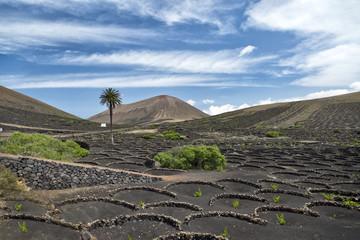 La Geria vineyards. Lanzarote. Canarias Islands. Spain.