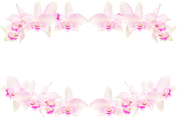 Pink cattleya, Orchids isolated on white
