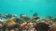 Coral and tropical fish in shallow water