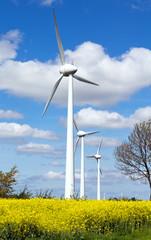 Windkraftanlagen im Rapsfeld