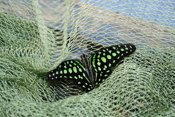 Colored butterfly in the green grid