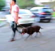 Walking the dog on the street