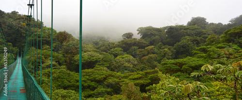 Papiers peints Amérique Centrale Forêt nuageuse de Monteverde