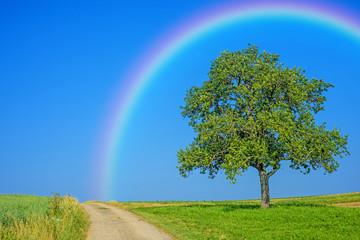 Weg mit Obstbaum und Regenbogen