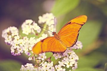 oranger Schmetterling auf Blümchen