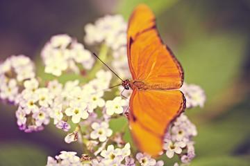 oranger Schmetterling auf Blümchen 2