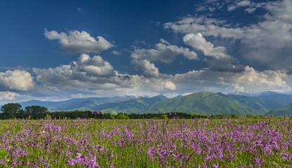 Summer scenery in the Alps and beautiful meadow