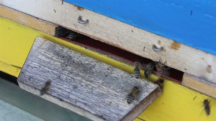 Close up of entrance to beehive with bees coming and going